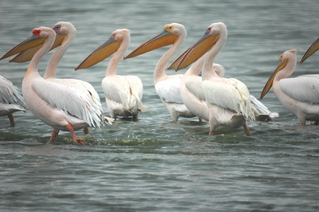 Gruppe von Flamingos in Ufernähe